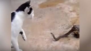 蛇と猫とカエル