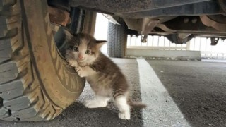 トラックの下に猫