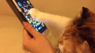 ツムツムする猫