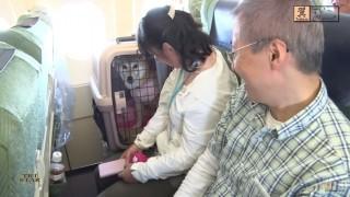 ペット同乗飛行機