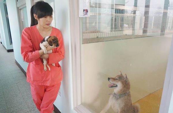 動物保護施設の女性2