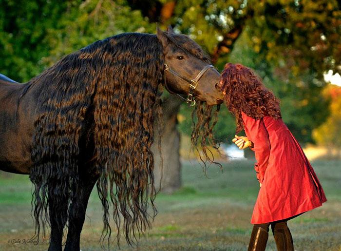 美しい黒い馬3