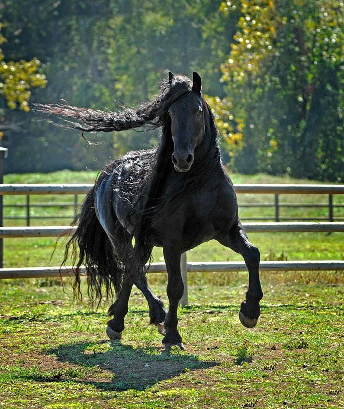 美しい黒い馬2