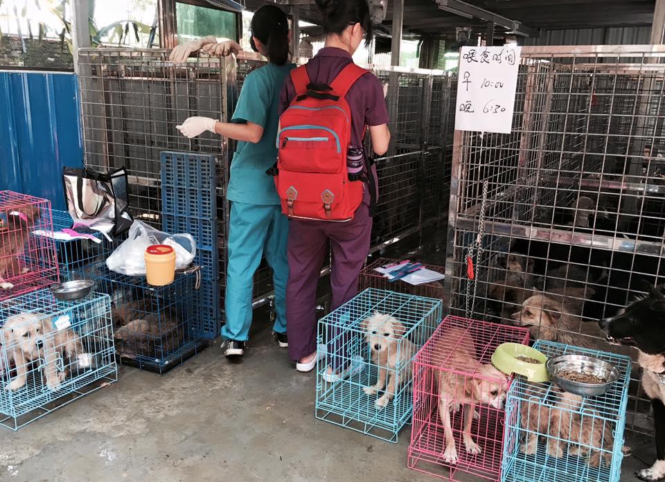 犬と愛護家