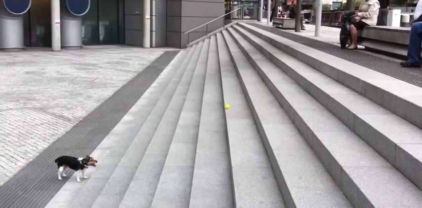 ボールを待つ犬