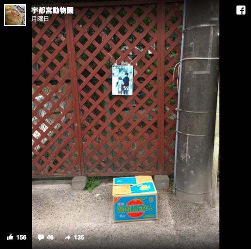 宇都宮動物園捨て猫1