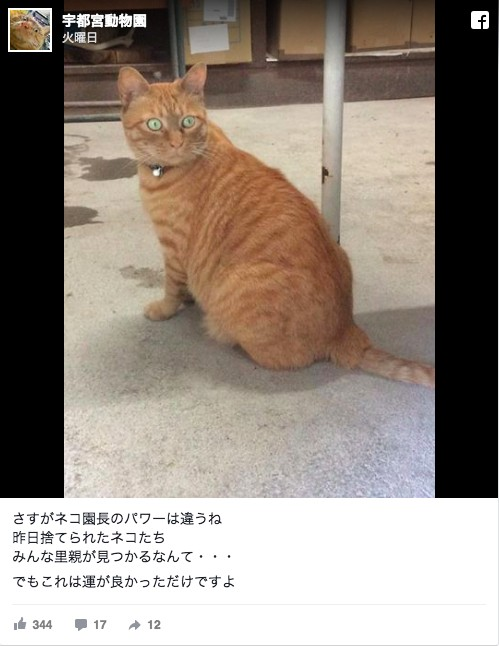 宇都宮動物園捨て猫2