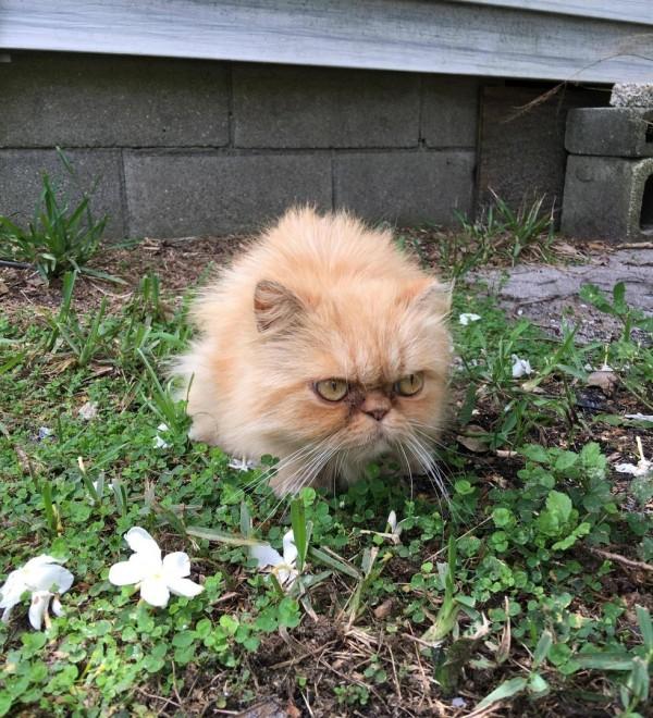 不機嫌な猫3