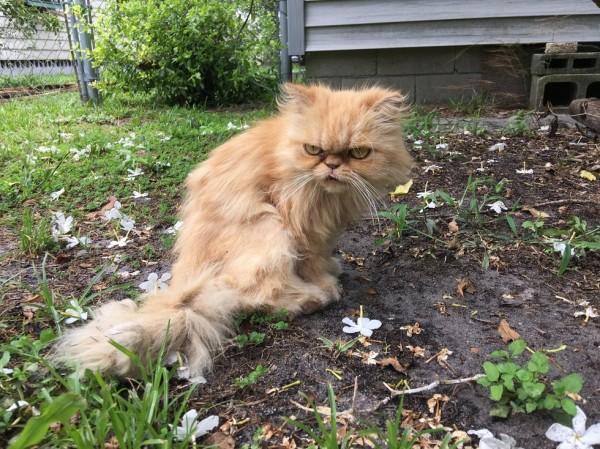不機嫌な猫2