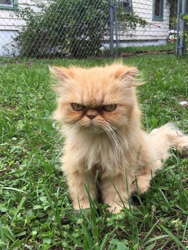 不機嫌な猫1