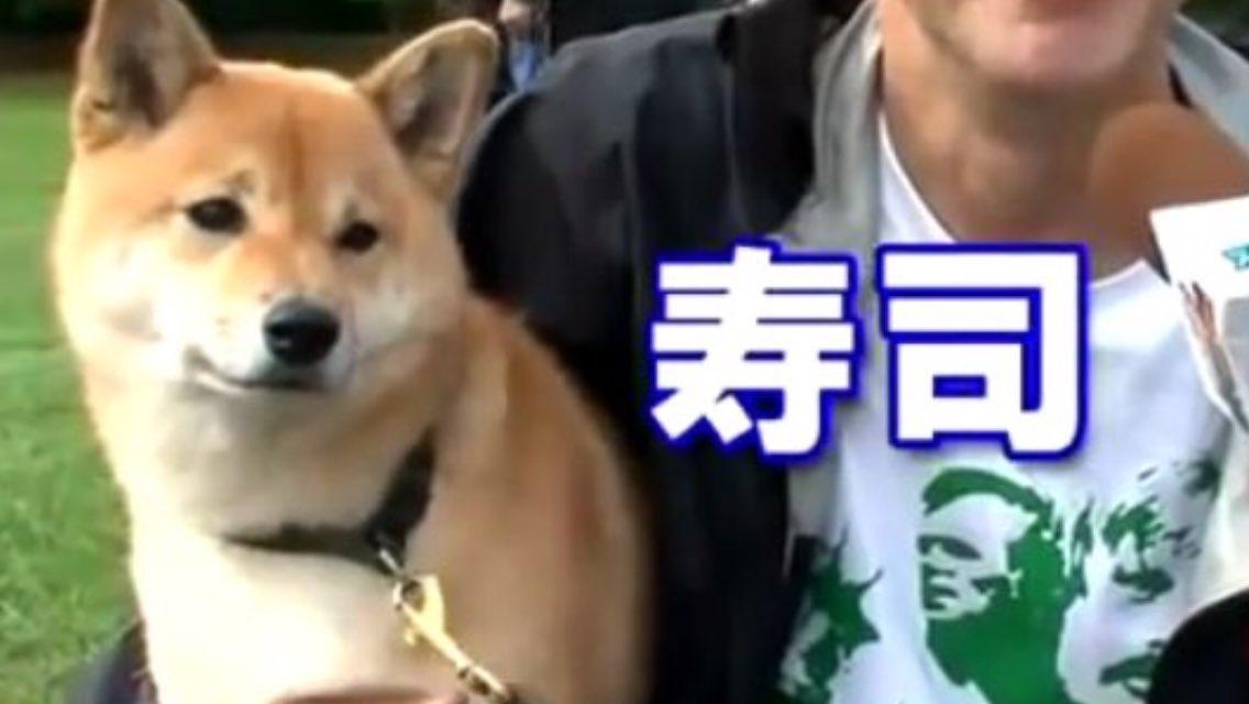 柴犬と外国人2