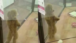 ペットショップで踊る犬