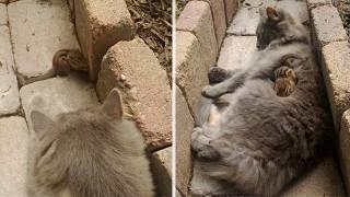 猫とリスの友情
