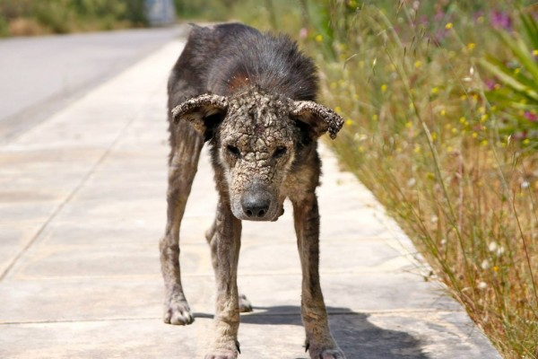 犬ペトラ2
