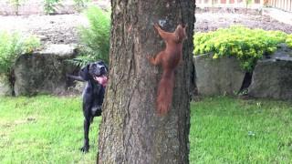 犬とリスの攻防