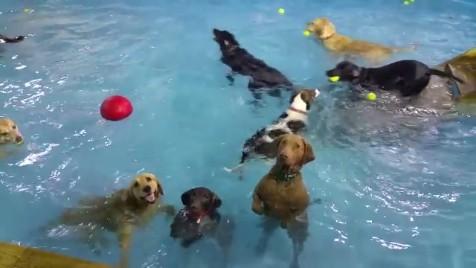 犬のプールパーティー1