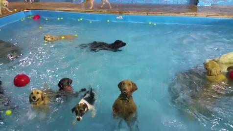 犬のプールパーティー2