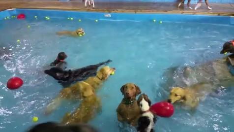 犬のプールパーティー3