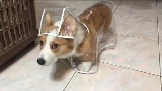 犬のレインコート