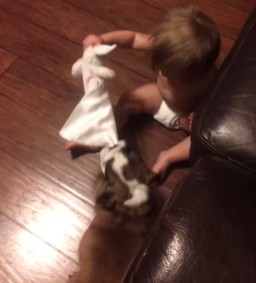 赤ちゃんと犬3