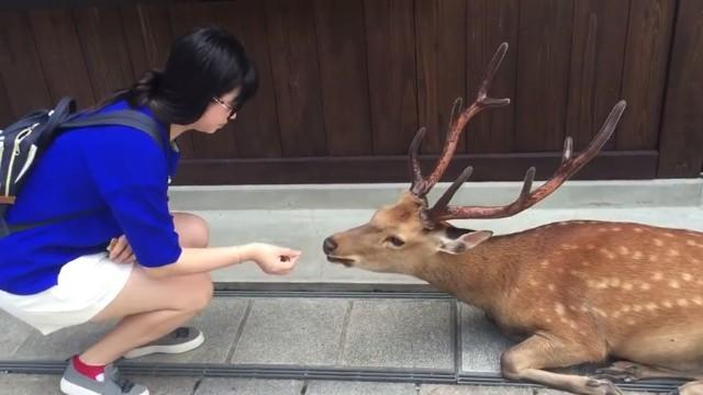 奈良の鹿1