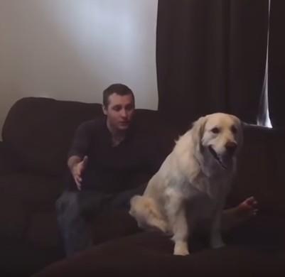 犬との信頼1