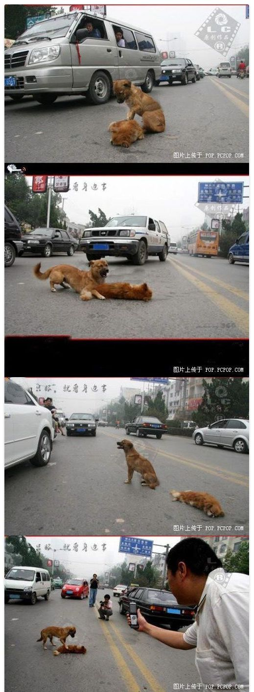中国人が写真