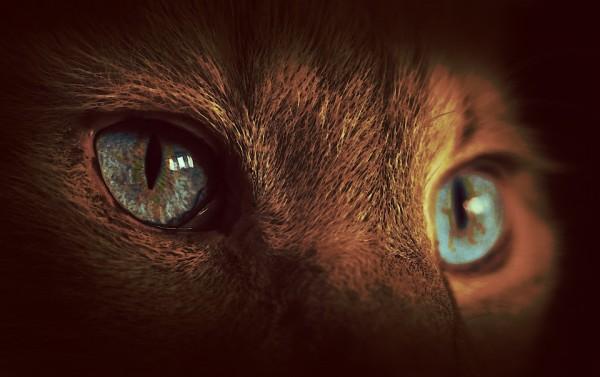 cat-1373318_960_720