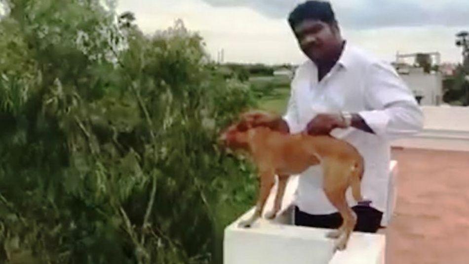 犬投げる動画