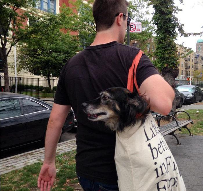 トートバッグに大型犬1