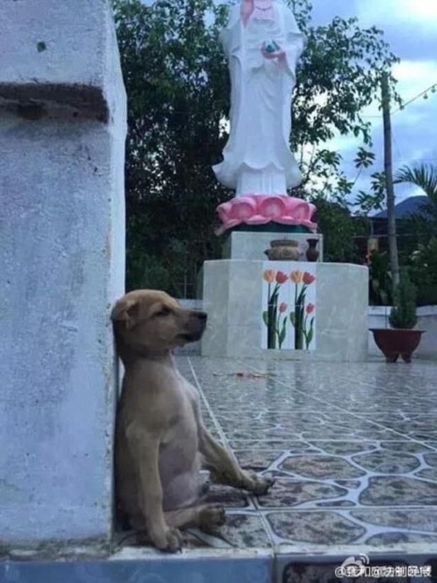 保護された2匹の犬4