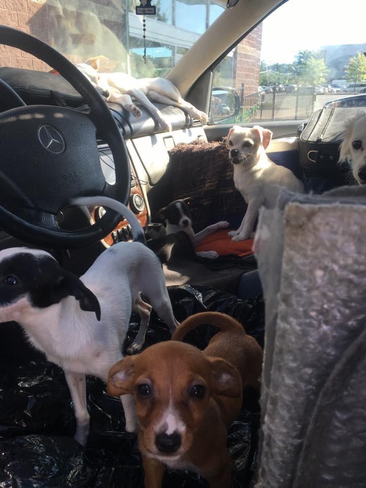暑い車に犬1