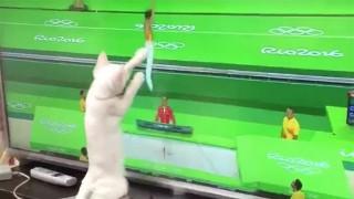 オリンピック猫