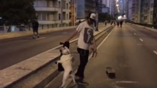 犬とボード