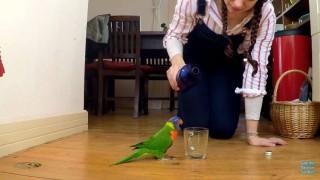虹色インコに水をあげる2