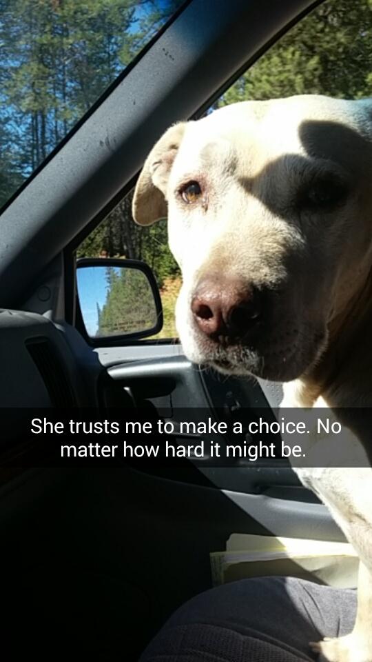 苦しむ犬の最期2