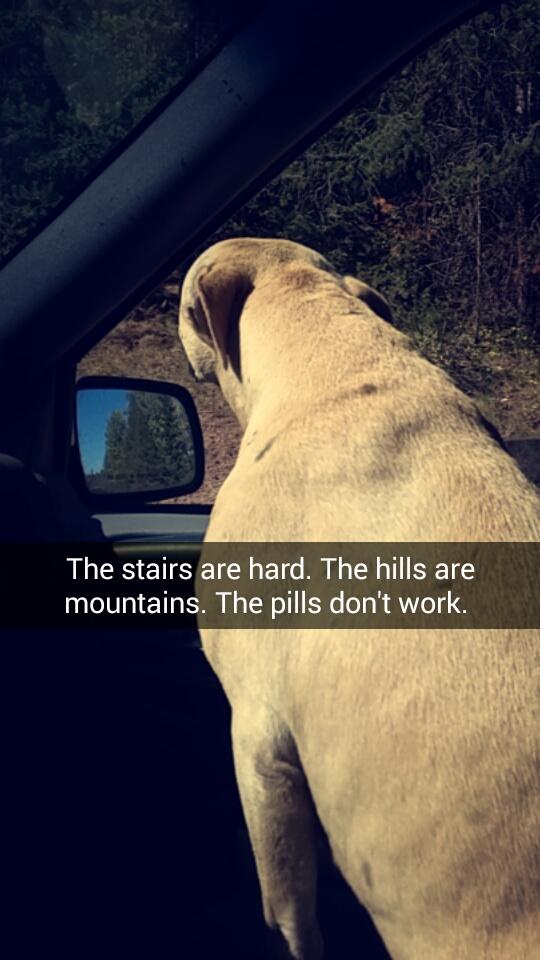 苦しむ犬の最期4