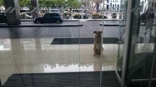 ホテルで待つ犬