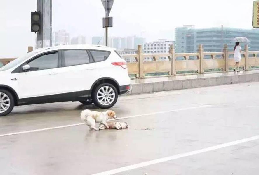 犬が犬を助ける2