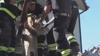 イタリア地震で犬の救助