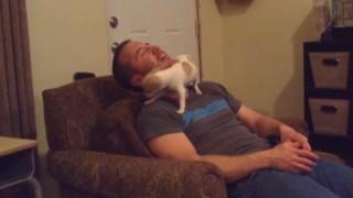 首の周りを歩く犬