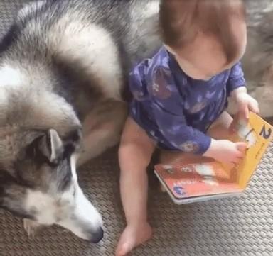 ハスキーと赤ちゃん3