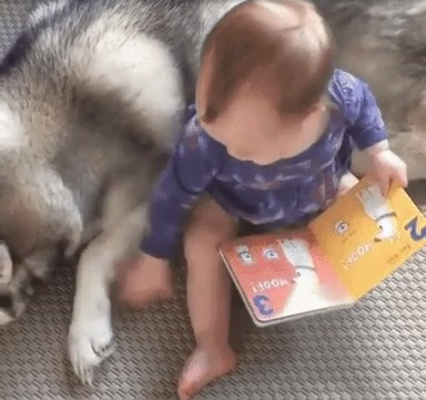ハスキーと赤ちゃん2