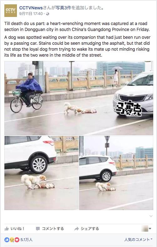 犬が犬を助ける1