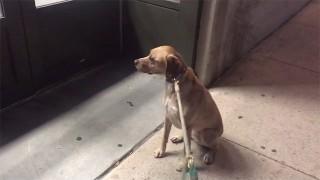 ペットショップで動揺する犬