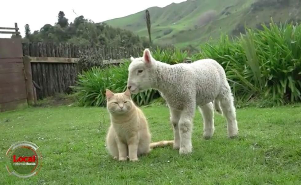 猫と子羊4