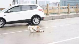 犬が犬を助ける