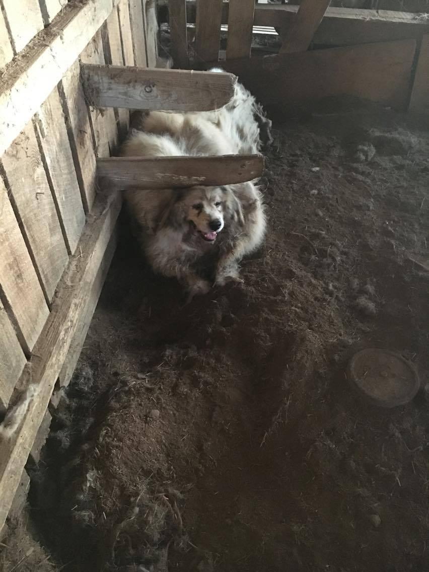 もふもふな犬1