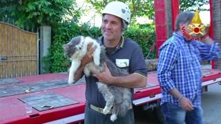 地震で助かる猫