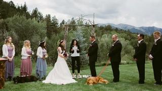 結婚式に犬